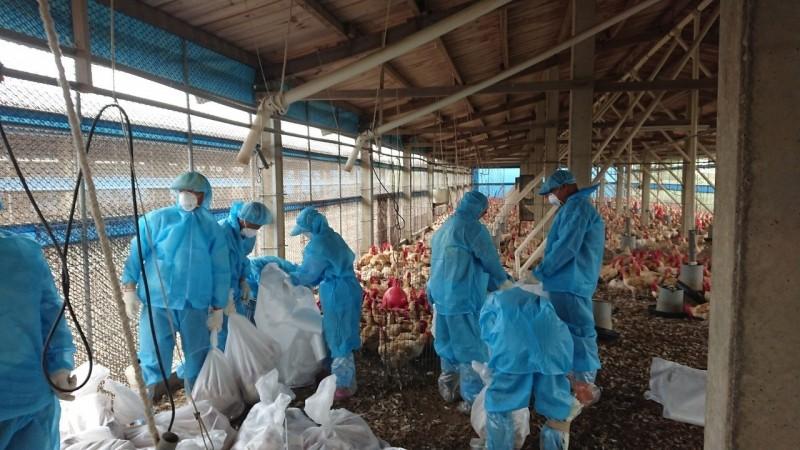 雲縣一週出現3場禽流感陽性場。(記者林國賢翻攝)