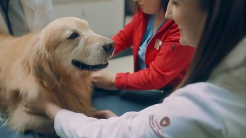 今年超級盃中場廣告,一位「狗主人」砸下600萬美元(約1億8201萬),向救他愛犬一命的獸醫致謝。(照片擷取uwmadison影片)