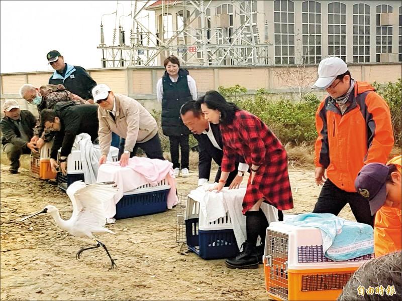 縣長翁章梁(右三)等人在布袋濕地野放黑面琵鷺。(記者蔡宗勳攝)