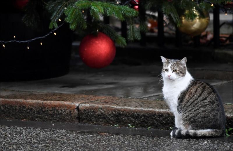 飼養在唐寧街10號首相府的英國「第一貓」賴瑞。(路透資料照)