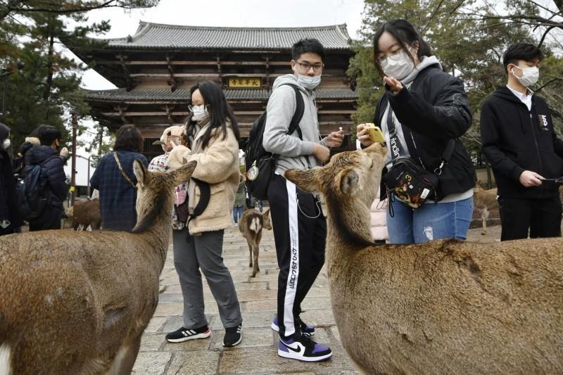 奈良公園受到觀光客歡迎,武漢肺炎疫情爆發後大受影響。(美聯社)