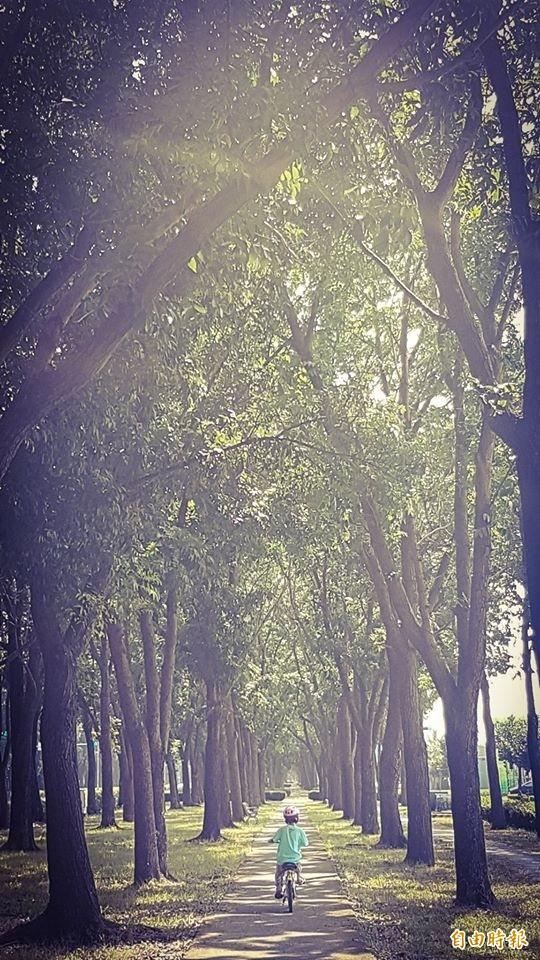 嘉義市世賢路自行車道,有如在森林之間騎乘。(記者林宜樟攝)