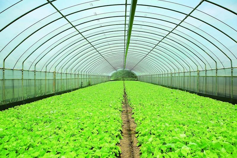 桃園市政府與桃園市農會合作推出有機蔬菜箱促銷團購活動,希望協助農民解決菜園內的新鮮蔬菜短暫無法出貨問題。(桃園市政府提供)