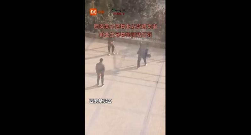 圖中右邊男子身前黑點為遭毆死犬隻。(翻攝微博)