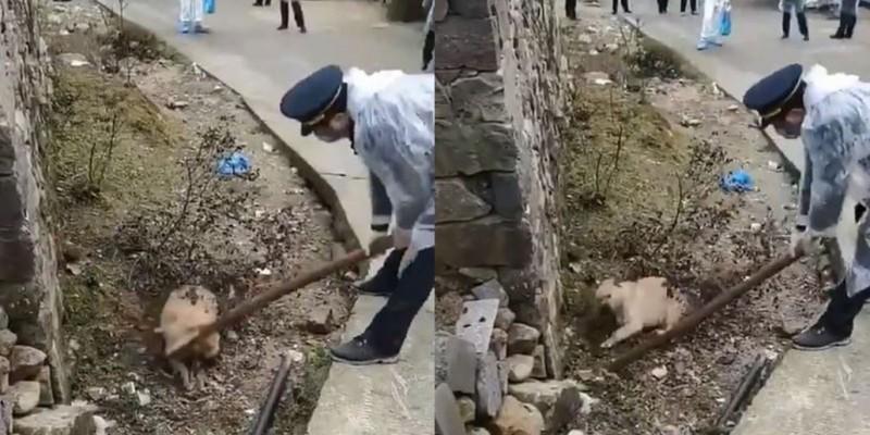 中國溫州當地村民怕被寵物狗傳染,找來公安屠殺全村狗隻。(圖取自微博)