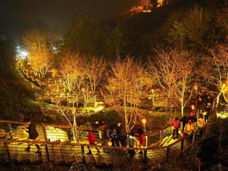 阿里山國家風景區管理處邀請民眾參加夜間品茗、賞花活動。(阿里山國家風景區管理處提供)