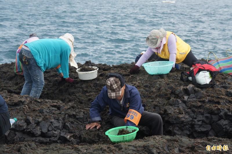 澎湖無人島姑婆嶼,展開第二次紫菜採收作業。(記者劉禹慶攝)