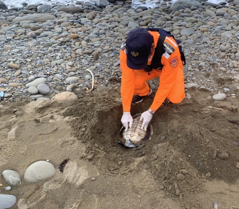 恆春半島一個半月發現多達8隻死亡海龜,海巡人員就地掩埋。(記者陳彥廷翻攝)