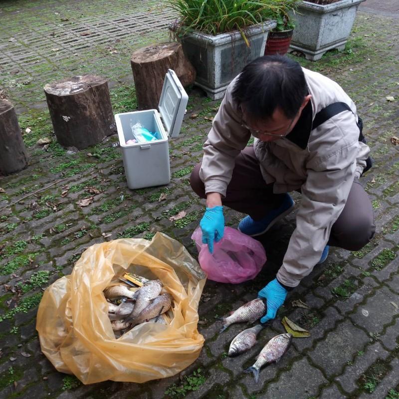 宜蘭縣人氣景點梅花湖,近期被民眾發現,湖中的泰國鯽身上有白色斑點,有些魚還因此暴斃,縣府獲報立即派員撈除。(宜蘭縣政府提供)