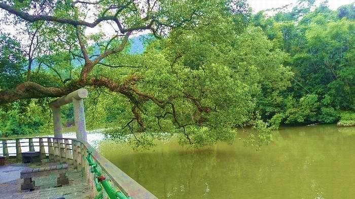橫山鄉三叉埤灌溉水塘,經改善後成為新竹縣的秘境,提供遊客們一個靜謐的風景場所。(新竹農田水利會提供)