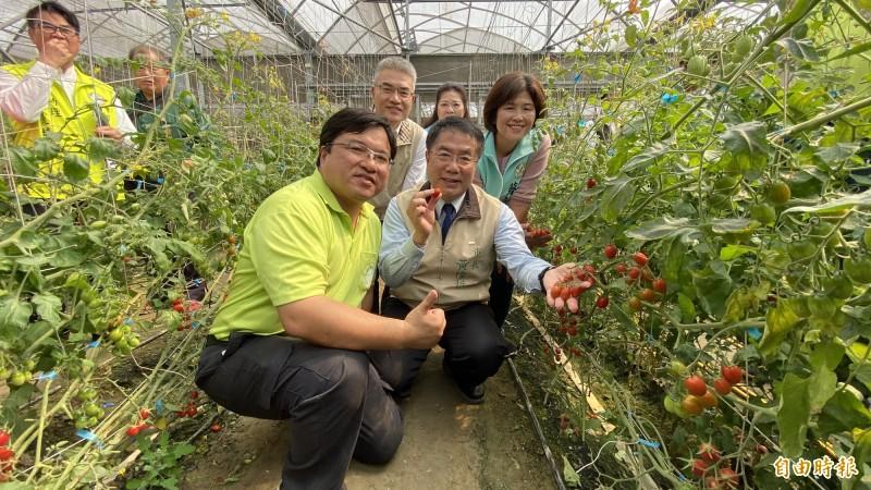 台南市長黃偉哲(前右)與溪北青農舉辦首次座談,當面聽取青農意見,並到青農賴建良(前左)的溫室小番茄園體驗採果。(記者楊金城攝)