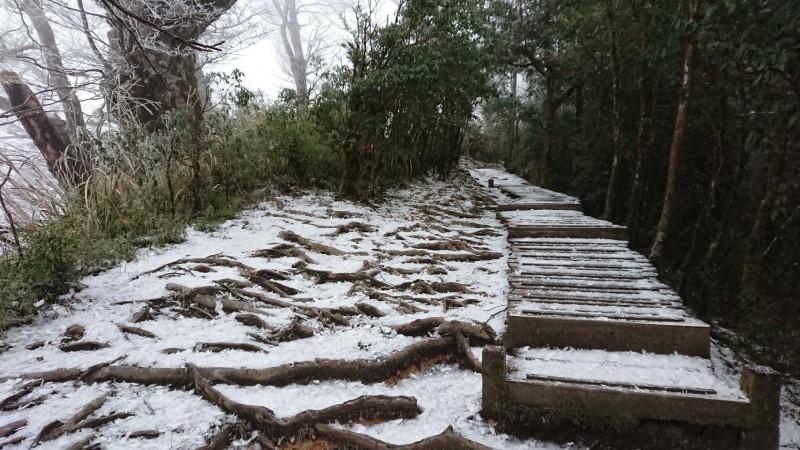 太平山氣溫降到零下2度,山毛櫸步道深夜飄雪。(記者江志雄翻攝)