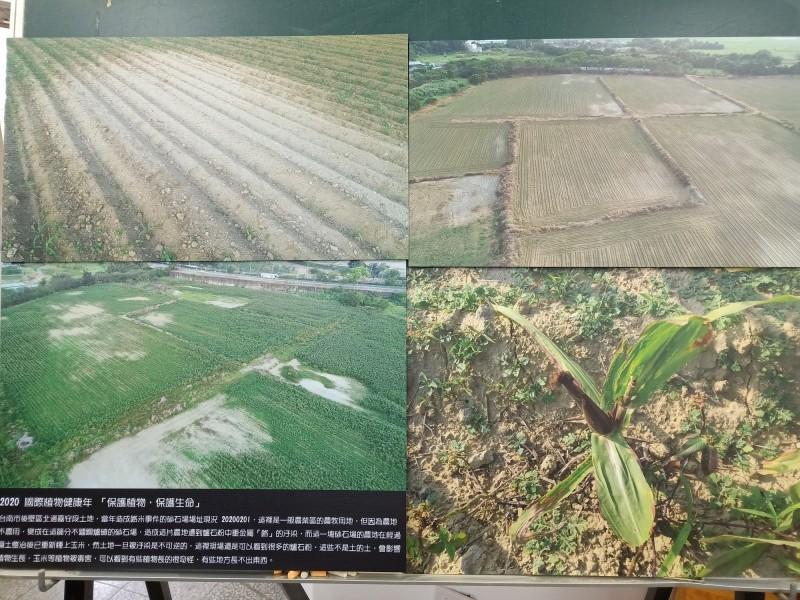 台南社大質疑遭重金屬汙染的後壁區嘉田村並未完整整治,種植農作物仍枯萎引發食安危機。(記者王姝琇攝)