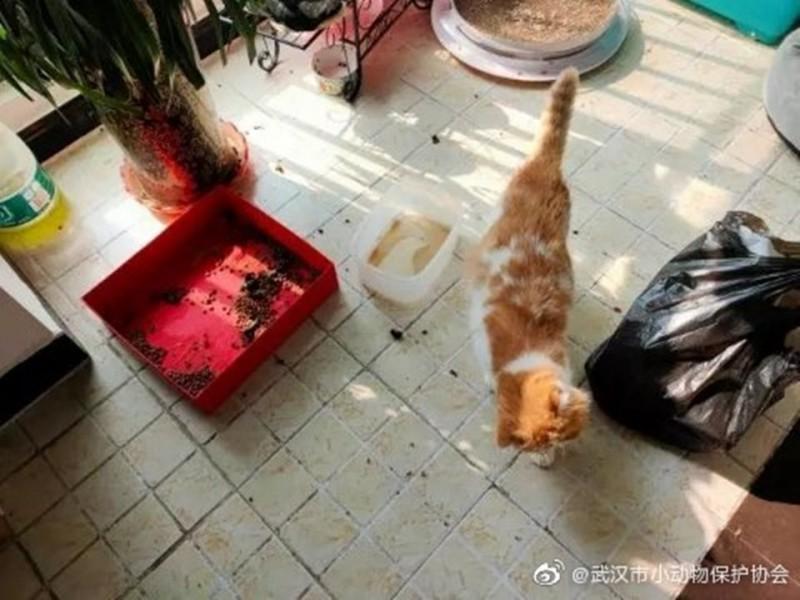 中國武漢市小動物保護協會受到武漢市10日最新防疫措施影響,無法再跨小區給予寵物救援。(翻攝微博)