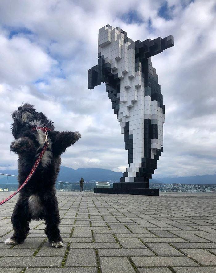 原po貼出黑色小狗以後腳站立,與後方的鯨魚雕像幾乎一模一樣。(圖擷自爆廢公社)