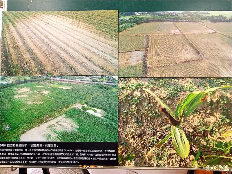 台南社大質疑遭重金屬汙染的控制場址解除管制後,種植農作物仍枯萎引發食安危機。(記者王姝琇攝)