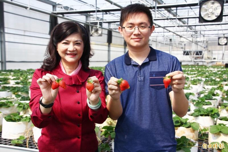 青農侯喬偉(右)以溫室栽培草莓及育苗,太保市農會總幹事黃麗貞(左)期待成為太保「第四寶」。(記者林宜樟攝)