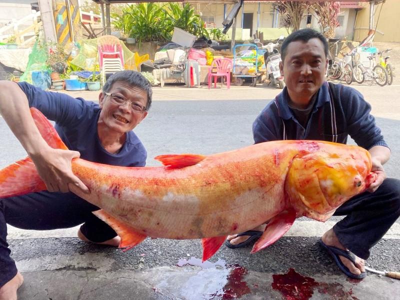大埔鄉代表會前主席吳宗霖(左)與友人在曾文水庫捕獲巨無霸級黃金大頭鰱。(記者林宜樟翻攝)