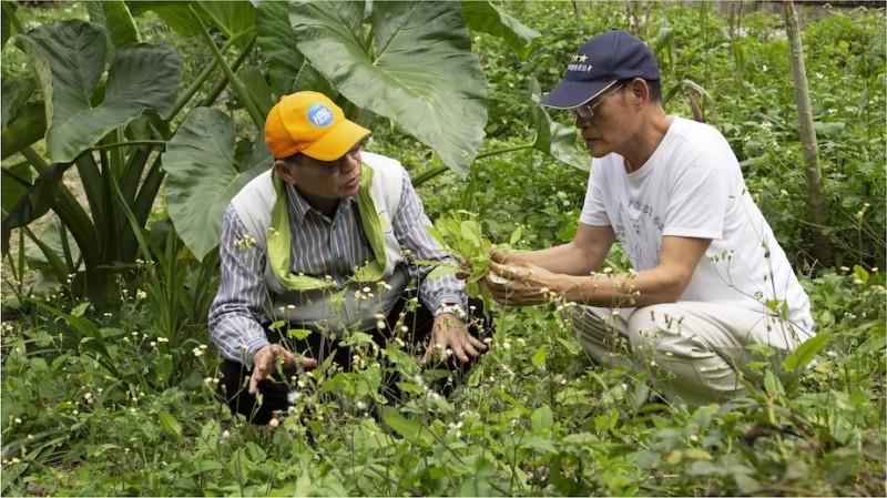 退休校長陳木城(左)和陳清枝(右)為圓夢借貸百萬,盼募集 4000 多位共建人,共同打造野菜學校。(野菜學校提供)