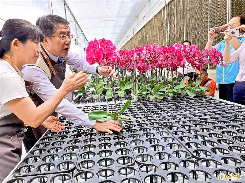 台灣國際蘭展將如期於三月七日開展,市長黃偉哲昨訪蘭園體驗蘭花培育過程。(記者王涵平攝)