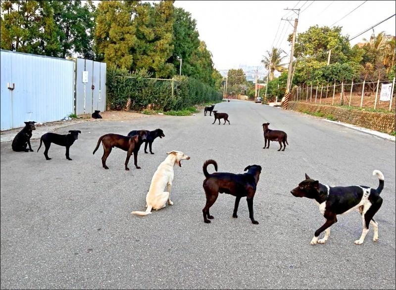 最新消息指出,香港一名確診武漢肺炎者家中的狗狗經由測試,出現弱陽性反應。(資料照,記者翻攝)