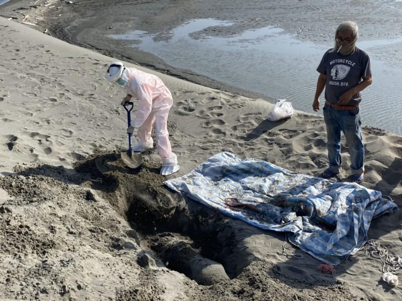 死亡的江豚經解剖後確定死因後,就地掩埋。(記者詹士弘翻攝)