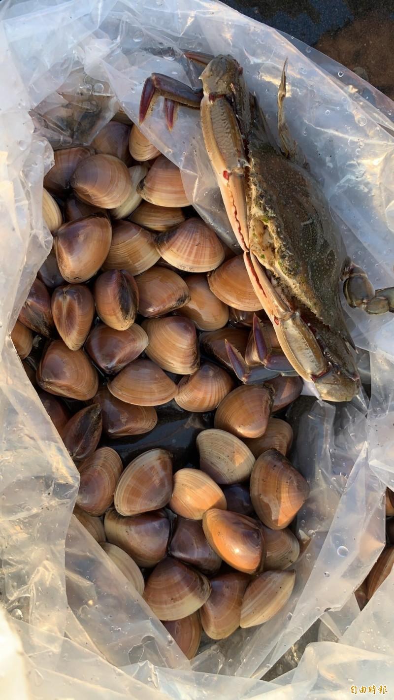 馬珂蛤成了餐桌佳餚。(記者洪臣宏攝)