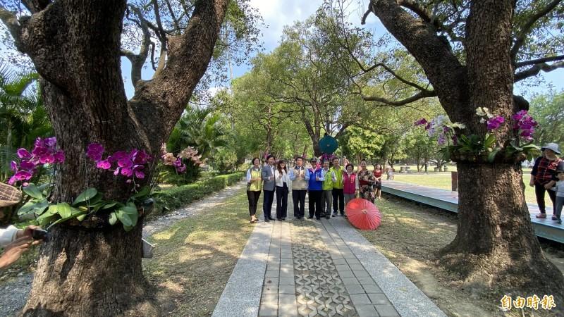 麻豆總爺藝文中心將蘭花佈置在樟樹綠色大道。(記者楊金城攝)