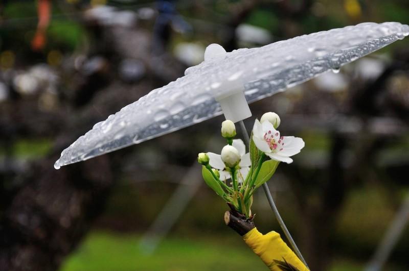 中央氣象局指出,今天(18日)北部、東半部地區降雨機率增高。(資料照)