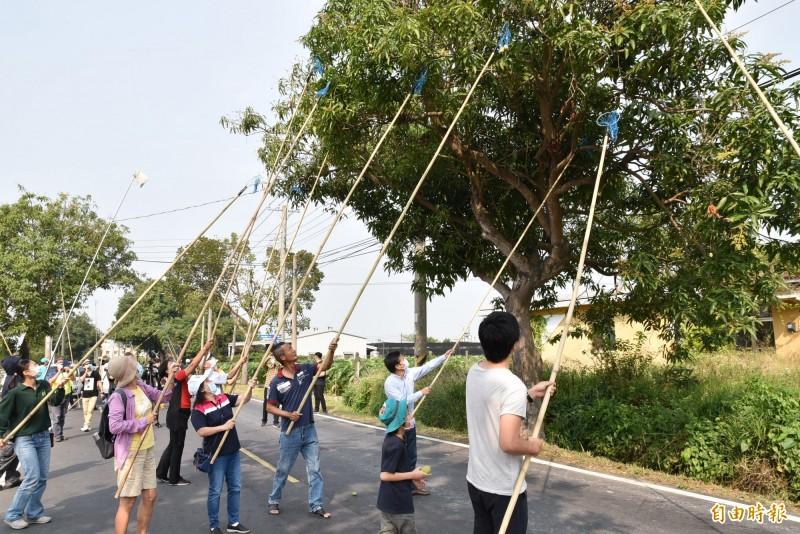 林內鄉公所封閉縣道154線讓民眾安心享受摃欉仔(芒果)樂趣,大人小孩玩得開心。(記者黃淑莉攝)