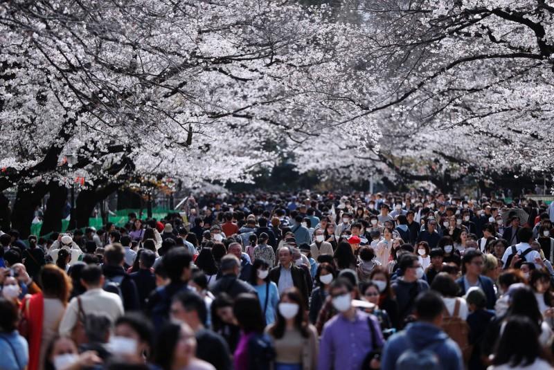 美國將日本的旅遊警示拉高到第三級,而日本當地現正值櫻花季。(路透)