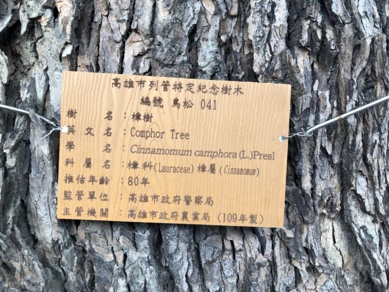 鳥松舊警察宿舍老樟樹今天「掛牌」,避免遭誤砍。(記者洪臣宏翻攝)