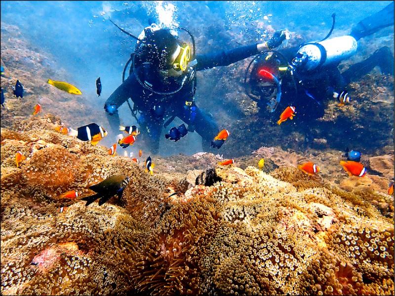 花蓮石梯坪海域珊瑚礁數量不少,吸引潛水遊客來欣賞。(張冠正提供)