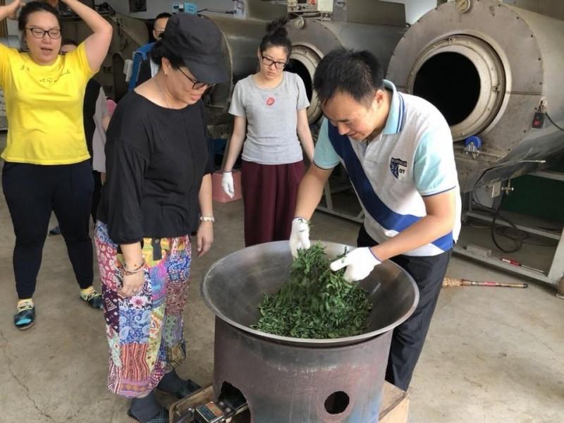 遊客到茶行除了品茗,還可以嚐試製茶。(農業局提供)