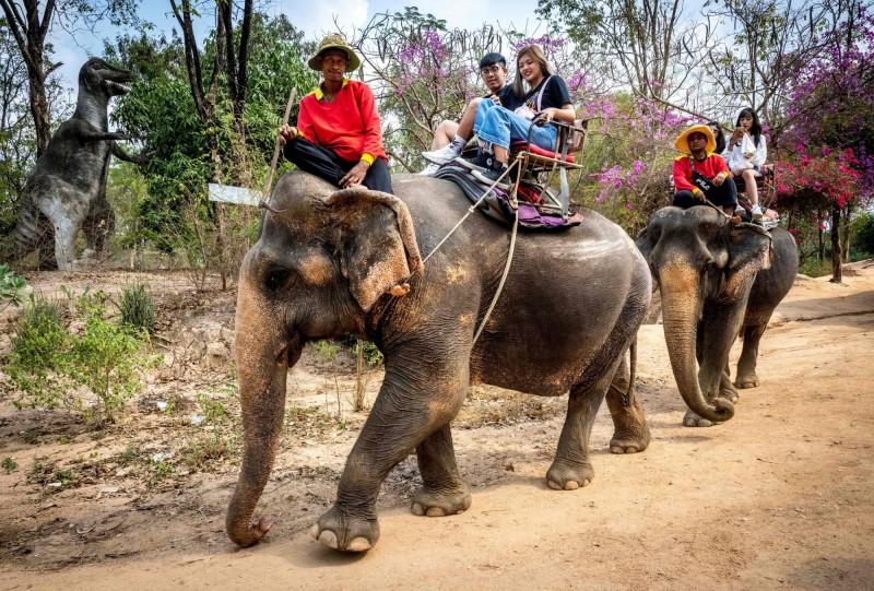 泰國旅遊業受疫情衝擊,2000頭大象「失業」。(法新社資料照)