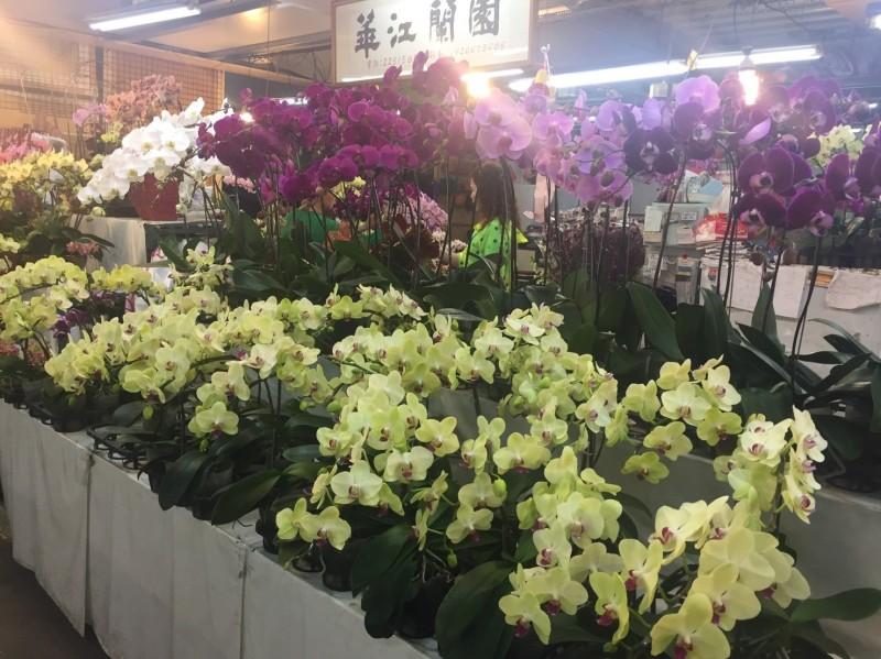 板橋花市理事長黃禎揚表示,今年買氣受到疫情影響跌落3至4成。(圖由新北市政府農業局提供)