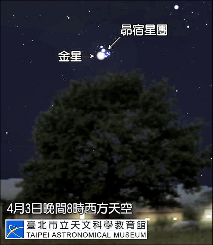 金星將與昴宿星團相會,民眾用肉眼就能看見5至6顆匯聚成團的恆星。 (台北市立天文館提供)
