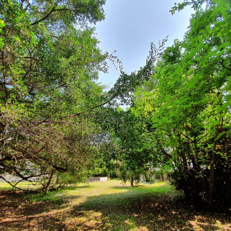 北屯區東山段的中廣電台原址綠樹成蔭。(圖由市議員黃健豪提供)