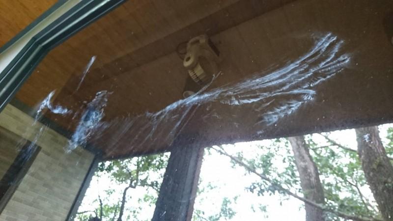 疑遭老鷹高速撞擊的玻璃,留下清楚的印記,連翅膀羽毛紋路都一目了然。(張姓民眾提供)