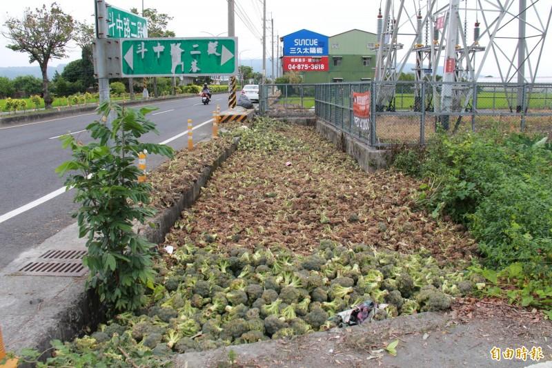 蕭姓民眾棄置數千顆青花菜,引起惡臭,讓民眾痛苦不堪。(記者陳冠備攝)