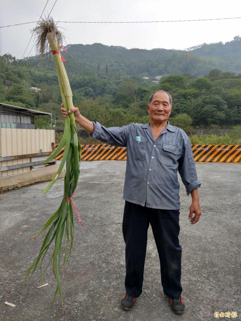 水里農民陳滄海種植「巨無霸」甜蒜,長度動輒200公分起跳,令人嘖嘖稱奇。(記者劉濱銓攝)