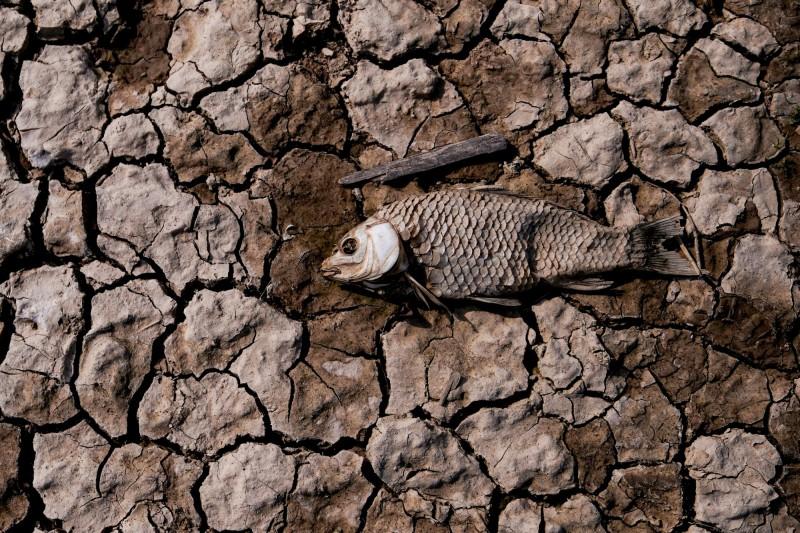 武漢肺炎蔓延之際,中國再受旱災侵襲。(路透)