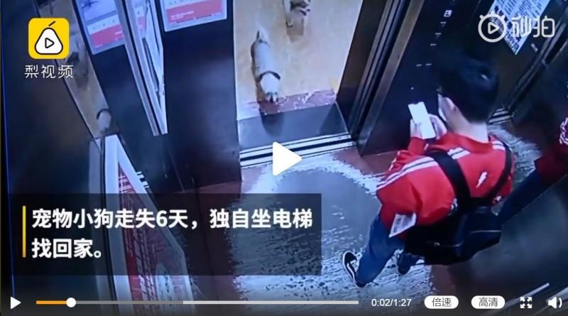 認出鄰居以後,多妹直接進入電梯。(圖擷取自微博)
