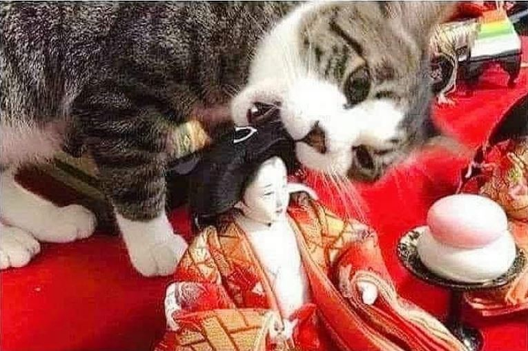 貓咪啃咬人偶。(圖擷取自爆料公社)