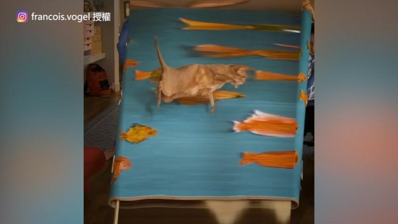 運用狹縫掃描攝影(Slit-scan photography)做出貓咪跳進水裡游泳的特效(圖片由Instagram帳號francois.vogel授權提供使用)