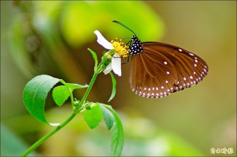 一項大型研究發現,過去30年來昆蟲減少了24%。(資料照)