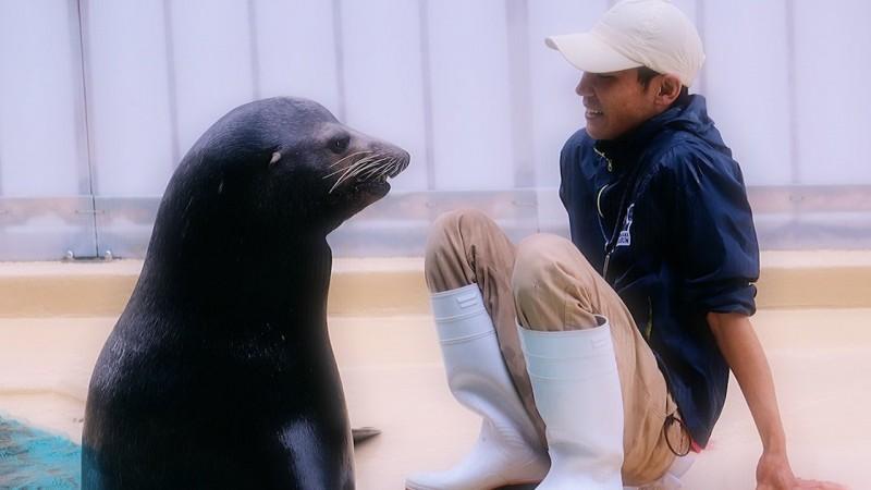 高知的桂濱水族館近期的推特幾乎都是由帥氣的飼育員們攻佔版面。(圖片由推特帳號 katurahama_aq 授權提供使用)