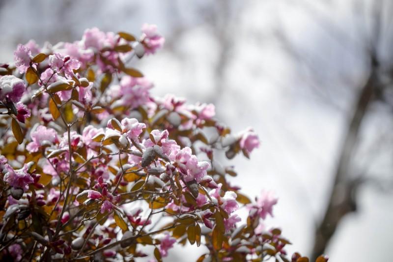 美國東部9日有許多地方出現破紀錄的低溫和罕見降雪。(美聯社)