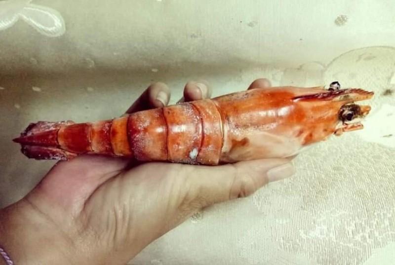 手掌大的蝦子。(圖擷取自爆料公社)