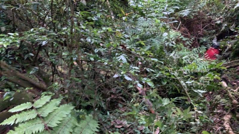 失聯老翁陳屍在陽明山草叢中。(記者鄭景議翻攝)